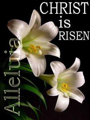 easter-lily-Christ-risen