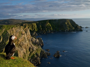 hermaness-reserve-shetland-islands_82585_990x742