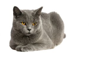 cat-blue-solid-jpg-500x0_q80_crop-smart_upscale-true